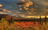 Title:Denali National Park Beautiful Landscape HD Wallpaper 07 Views:1984