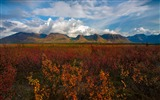 Title:Denali National Park Beautiful Landscape HD Wallpaper 08 Views:1737