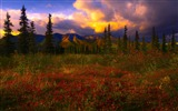 Title:Denali National Park Beautiful Landscape HD Wallpaper 10 Views:2099