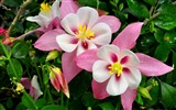 Title:Blooming flowers photo widescreen wallpaper Views:7096