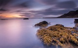 Title:bay stones seaweed dawn-Nature Landscape HD wallpaper Views:2592