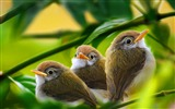 Title:bird branch grass leaves-Animal HD Photo Wallpaper Views:4138