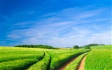 Title:green area farmar-Nature Landscape HD wallpaper Views:3824