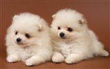 Title:puppies couple kids-Animal HD Photo Wallpaper Views:5431
