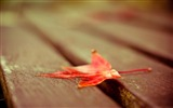 Title:red leaf down-Macro photography HD Wallpaper Views:3873