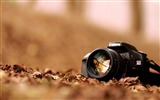 Title:Canon eos 30d-High quality wallpapers Views:4779
