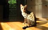 Title:Cat under the sun-Windows theme HD wallpaper Views:3049