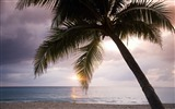 Title:Jamaican sunset under a palm tree-Windows theme HD wallpaper Views:2955