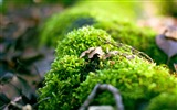 Title:Plant photography Macro Desktop HD Wallpaper Views:6369
