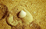 Title:seashell and rock-High quality wallpapers Views:3284