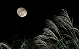 Title:Bright moon-Mid-Autumn Festival Landscape Wallpaper 06 Views:3316