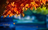 Title:Fall Colors-October 2013 Calendar Wallpaper Views:9048