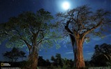 Title:Baobab Trees Tanzania-National Geographic Wallpaper Views:3187