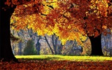 Title:Beautiful golden autumn landscape wallpaper 04 Views:2425