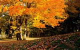 Title:Beautiful golden autumn landscape wallpaper 05 Views:2198