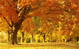 Title:Beautiful golden autumn landscape wallpaper 08 Views:2373