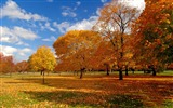 Title:Beautiful golden autumn landscape wallpaper 09 Views:2973
