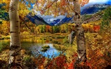 Title:Beautiful golden autumn landscape wallpaper 11 Views:2260