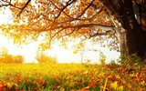Title:Beautiful golden autumn landscape wallpaper 12 Views:2377