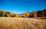 Title:Beautiful golden autumn landscape wallpaper 15 Views:2311