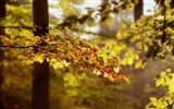Title:leaves tree branches-Nature HD Wallpaper Views:3135