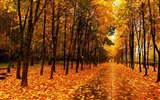 Title:Autumn beautiful Nature scenery wallpaper Views:14132