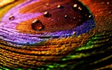 Title:Colorful cloth-Abstract HD Wallpaper Views:3190