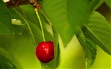 Title:berry cherry red ripe-Food HD Wallpaper Views:3694