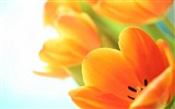 Title:Beautiful flower picture HD Widescreen Wallpaper Views:7093