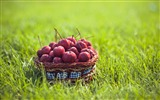 Title:fruit grass ranetki basket-Food HD Wallpaper Views:3111