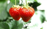 Title:strawberries couple-Food HD Wallpaper Views:2952