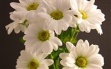 Title:bouquet flowers petals white-Plants Photo Wallpaper Views:2638