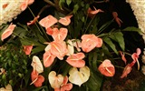 Title:flowers plants leaves-Plants Photo Wallpaper Views:2616