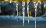 Title:icicles on a cold afternoon-Nature Desktop Wallpaper Views:2315