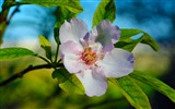 Title:beautiful blossom macro-Seasons HD Wallpaper Views:2791