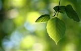 Title:green leaves spring-Seasons HD Wallpaper Views:2801