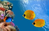 Title:Featured Animal World HD Wallpaper Views:8754