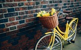 Title:bike flowers yellow tulips-High quality wallpaper Views:2280