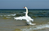 Title:bird waves sea horizon-Photo hd Wallpaper Views:2709