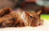Title:cat lying-Photo hd Wallpaper Views:3835