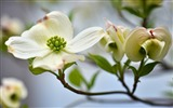 Title:flower white-plants images wallpaper Views:2243