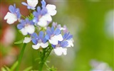 Title:flowers macro blurring-plants images wallpaper Views:2435