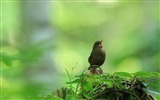 Title:Grassland birds chirping-Bing theme wallpaper Views:2505