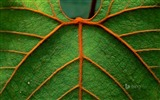 Title:Hairy green leaves-Bing theme wallpaper Views:2359