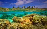 Title:Underwater coral-Bing theme wallpaper Views:2681