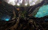 Title:Underwater roots-Bing theme wallpaper Views:2297