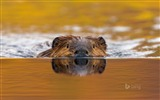 Title:Water swimming animals-Bing theme wallpaper Views:2619