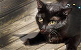 Title:cat black face tongue funny-Widescreen Wallpaper Views:2839