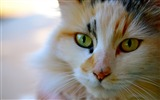 Title:cat eyes color stripe-Widescreen Wallpaper Views:2441