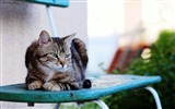 Title:cat sitting striped-Widescreen Wallpaper Views:2666